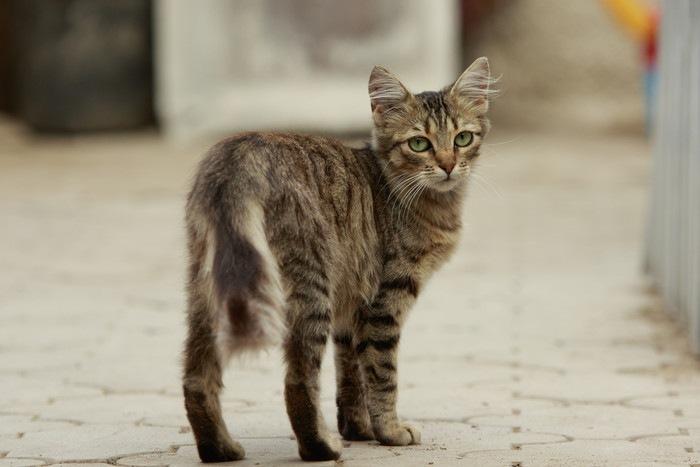 後ろを見る猫
