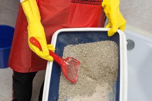 ゴム手袋をしてトイレ掃除をする人
