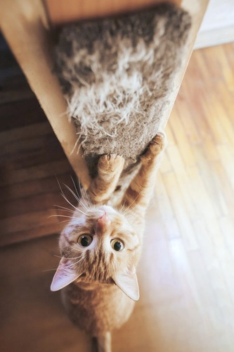 爪とぎをする猫ちゃん