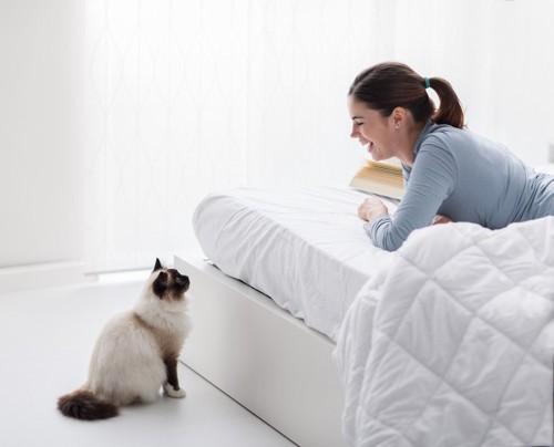 猫と見つめあう人