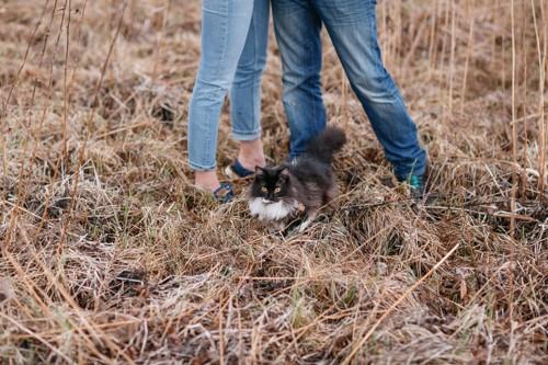 人間の足元にいる猫