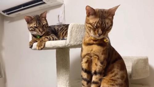 目を細める2匹の猫