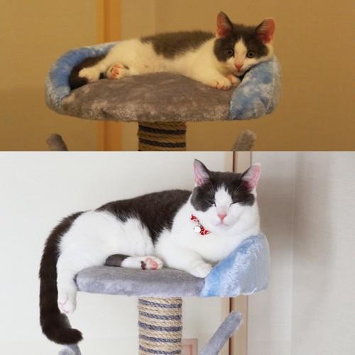 成長した猫ビフォーアフター