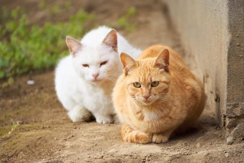 野良猫の夫婦