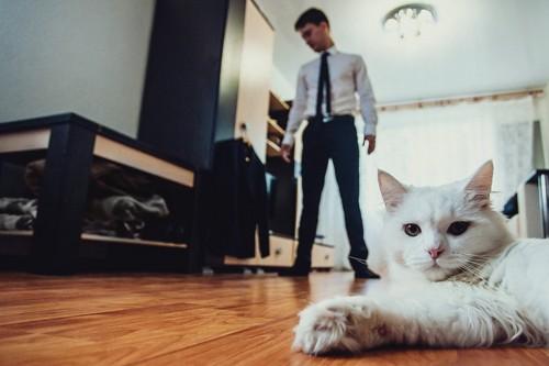 男性と部屋にいる猫