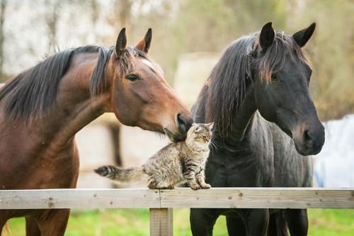 牧場にいる猫