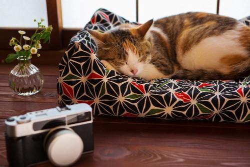古いカメラと眠る三毛猫