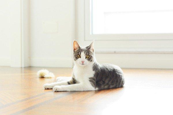 明るい室内でくつろぐ猫