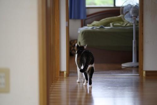 家の中を歩く猫の後ろ姿