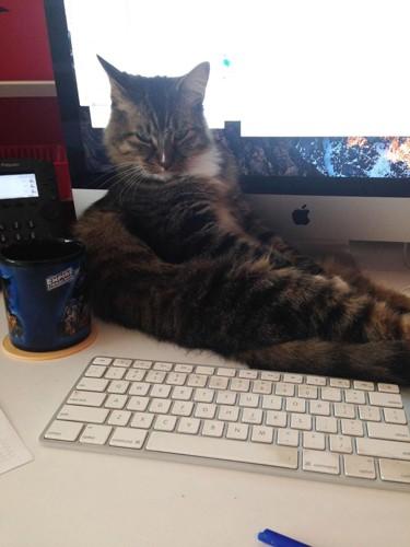 PCの前に座る猫