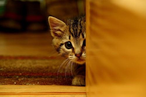 怯えて物陰からこちらを見る子猫