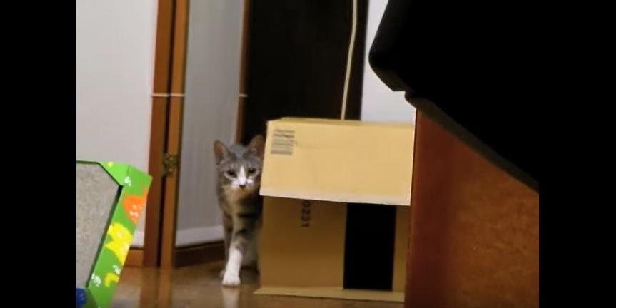 遠くから歩く猫