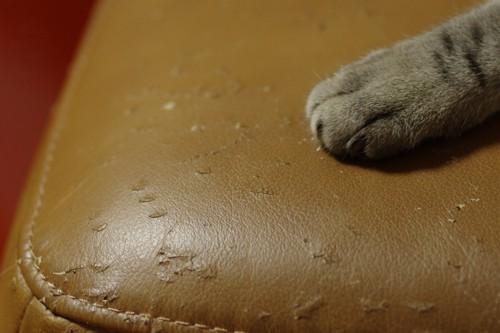 猫に爪を研がれたソファ