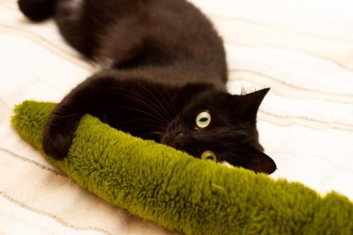 蛇型のおもちゃに抱き着く猫