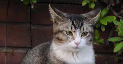 屋外に座る成長した猫