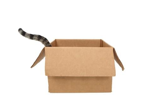 箱からしっぽを出す猫