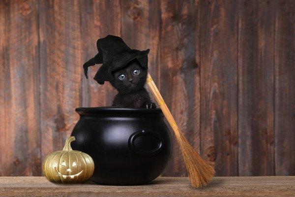 黒いつぼに入った黒い子猫
