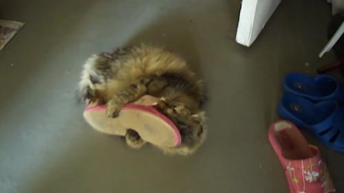 ホールドする猫