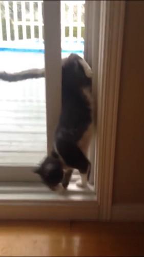 頭を入れる猫