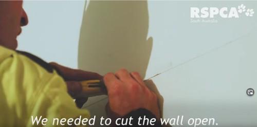 壁を切る人