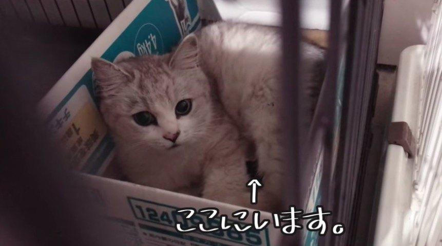 1匹の子猫
