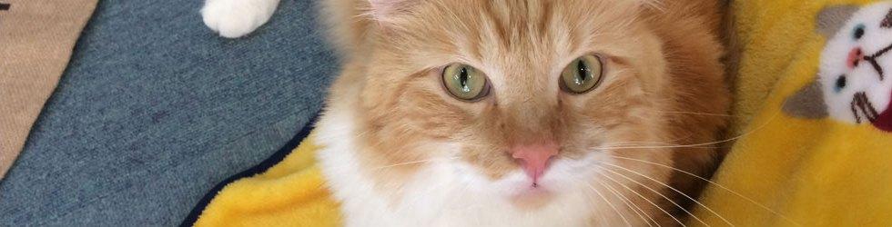 ご挨拶ページの上を見上げている猫の画像