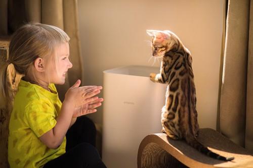 少女と二本足で立つ子猫
