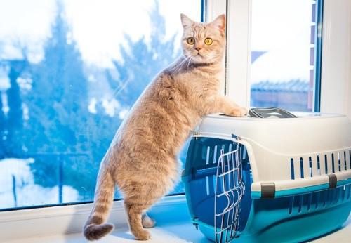 窓際にあるキャリー