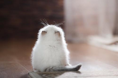 座って上を見る子猫の後ろ姿