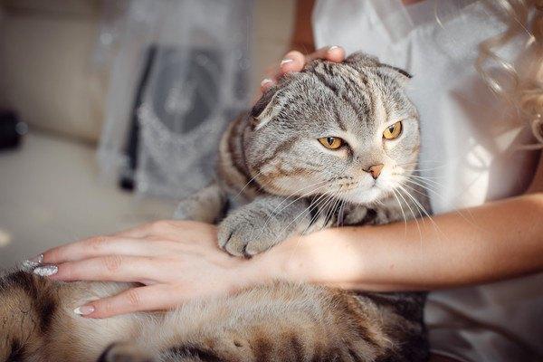 膝に乗せられて撫でられるキジ猫