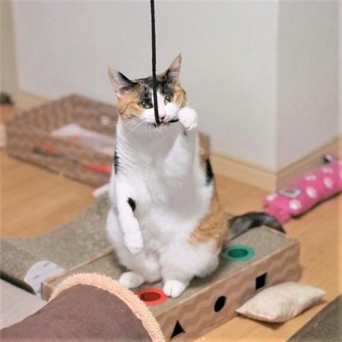 真面目な猫
