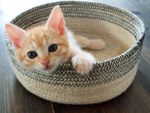 籠に入った子猫の写真