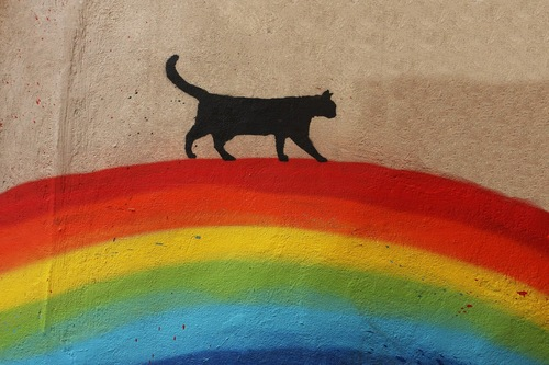 虹の上を歩く猫の絵