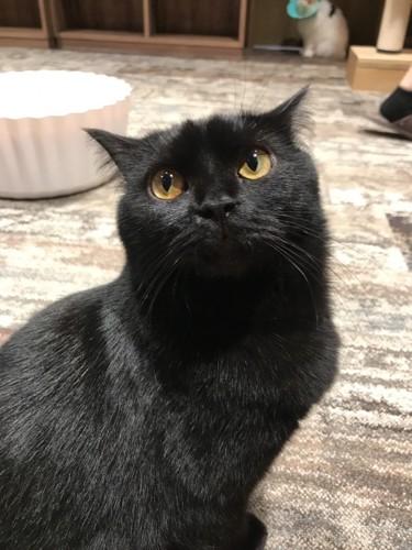 写真魂が掻き立てられる黒猫#