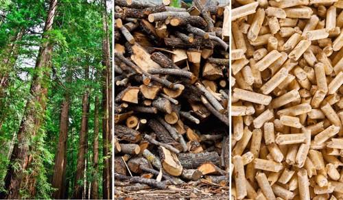 木とウッドチップとペレット