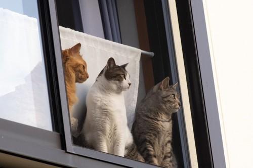 並んだ猫たち