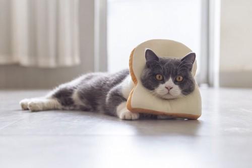 パンを被る猫