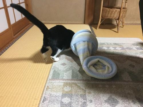 #ワクワクしながらキャットトンネルを観察する猫#
