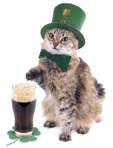 アイルランドの猫