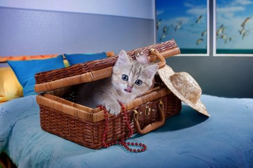 バスケットに入る猫