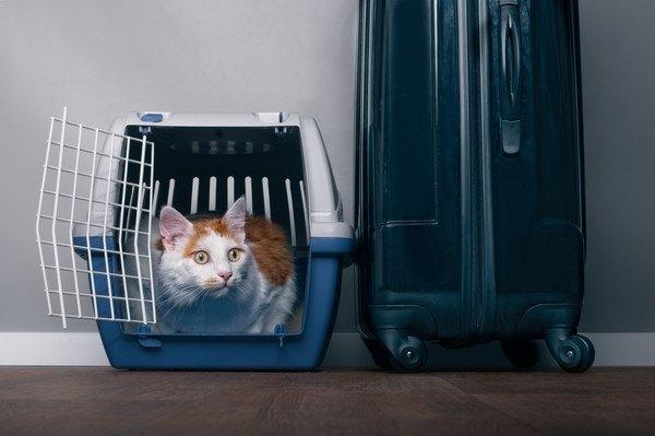 スーツケースとケージ内の猫