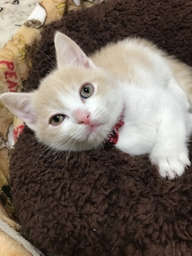 眠そうにこちらを見上げる子猫