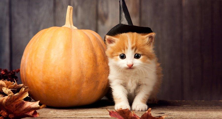 かぼちゃと猫