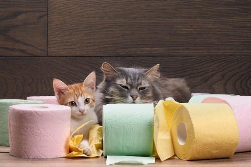 カラフルなトイレットペーパーに囲まれている猫と子猫