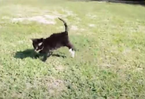 芝生の上の子猫