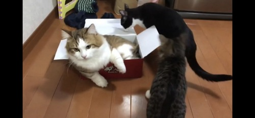 箱にはいる秀吉くん