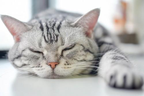 夏にバテ気味の猫イメージ