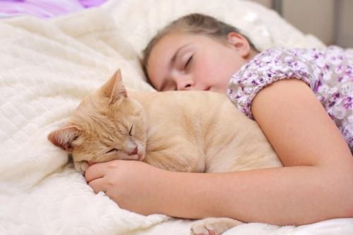 少女の腕の中で寝る猫