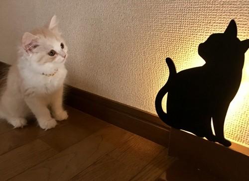 「ちら見」のキャットウォールライトと猫