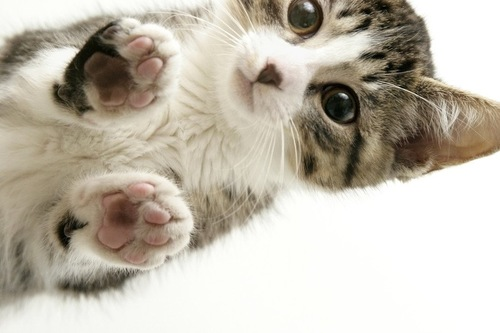 下から見る子猫
